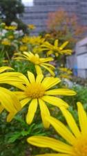 黄色の花壇