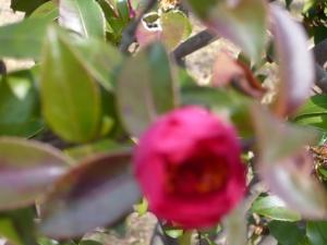 鮮やかすぎる美しき(水元公園(1))