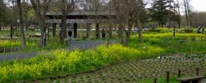 水元公園は花盛り その1
