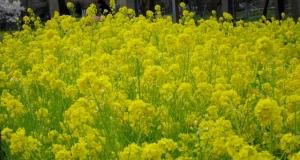 水元公園は花盛り その2