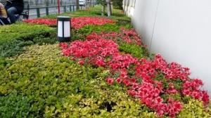 金町3丁目 バス停前の花壇