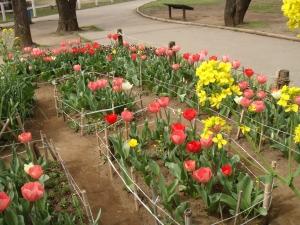 お花いっぱい上千葉砂原公園の花園