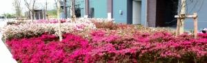 「シティ金町」の周りの花壇 その1