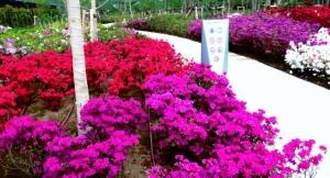 「シティ金町」の周りの花壇 その2