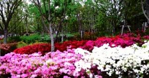 「シティ金町」の周りの花壇 その3