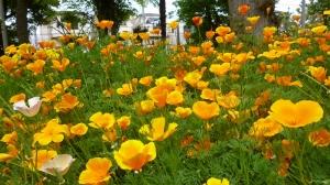 黄色い花畑