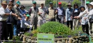 渋江公園花壇、植え替えです その1