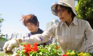 渋江公園花壇の植え替え その2