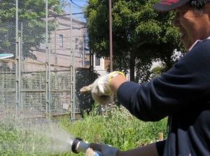 渋江公園花壇の植え替え その3