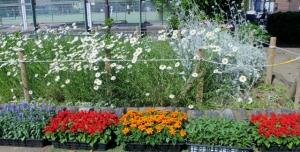渋江公園の花壇、植え替えの様子