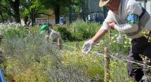渋江公園の花壇の植え替えの様子