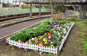 西新小岩リバーハイツ中庭の花壇