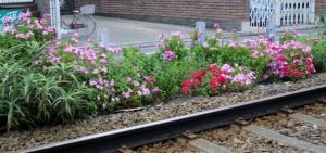 線路脇の花