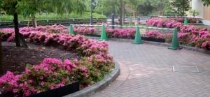 アリオのバス停付近の花