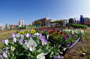 曳舟川親水公園(広場ゾーン)花壇
