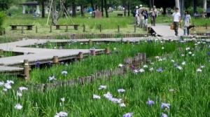 水元公園 その2