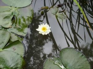 あわれ美しき水上の花