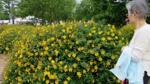水元公園 黄色い花 その1