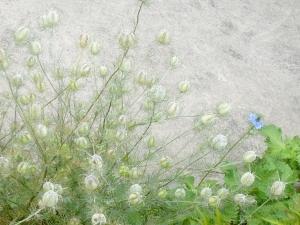 のこり1輪の花