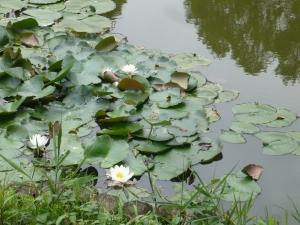 スイレン池はまるであの有名画家のそれに似て