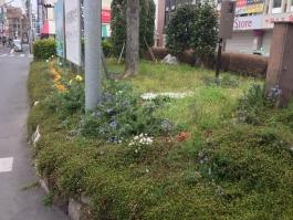金町駅北口の花壇です