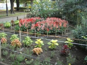 花園会この夏の花壇