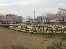 曳舟川親水公園(広場ゾーン)の花壇