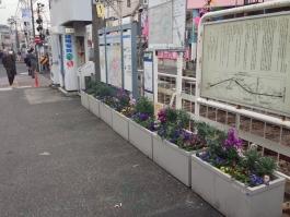 立石駅前の愛情を込めた花壇