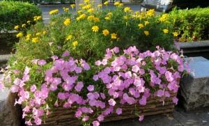 金町駅南口の花壇 その2