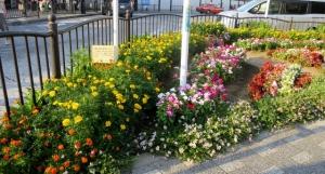 金町駅南口の花壇 その3