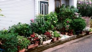 金町5丁目の花壇