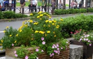 金町駅南口の、もう一つの花壇