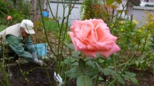 花を植え、愛する男。