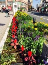 亀有バス停横のプランターの花々