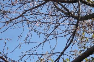空の青と桜色の気配