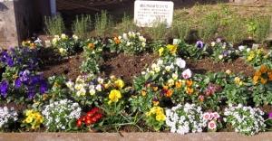 区役所のバス停の花壇 その1