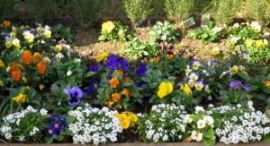 区役所のバス停の花壇 その2