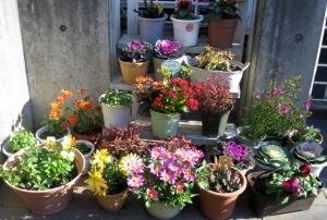 金町5丁目の通りの花