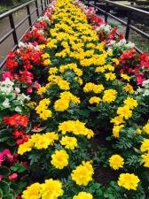 幸せの黄色いお花