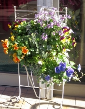 金町駅北口の花