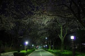 特集 夜桜4