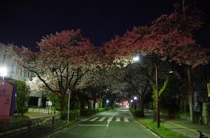特集 夜桜3