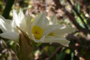 美しき春へのお誘い