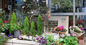 東金町3丁目の花