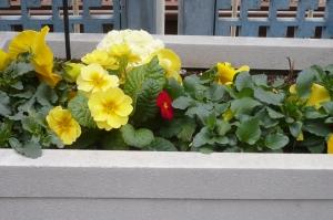春を呼ぶ立石駅前(1)