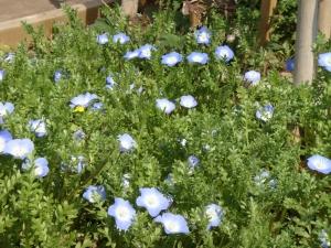 ブルーの花が目立ちます。