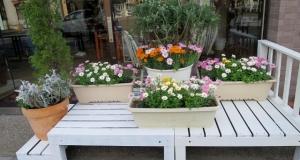 柴又街道の花 その2