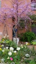 柴又街道の花 その3