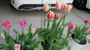柴又7丁目の花