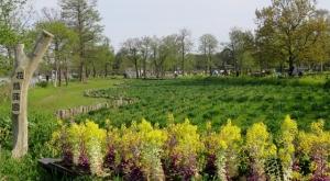 水元公園の葉ボタンの花